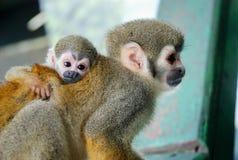 Pequeño abrazo del mono del bebé su mamá Imagen de archivo