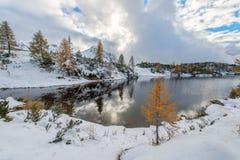 Pequeño alerce cerca del lago de la montaña Imagen de archivo libre de regalías