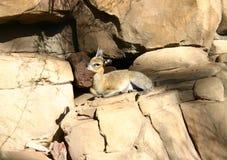 Pequeño animal Fotos de archivo libres de regalías