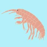 Pequeño animal del Amphipoda, organismo planctónico Imagen de archivo libre de regalías