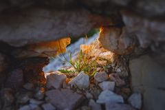 Pequeño arbusto brillante y colorido de las flores en el agujero de una pared rocosa, versión del alto contraste fotos de archivo libres de regalías