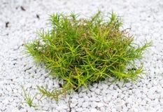 Pequeño arbusto verde Fotos de archivo libres de regalías