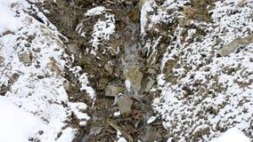Pequeño arroyo de la montaña que fluye en nevado pedregoso almacen de video