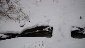 Pequeño arroyo en el invierno y un puente de madera a través de él almacen de video