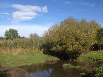 Pequeño arroyo en otoño Foto de archivo libre de regalías