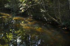 Pequeño arroyo en un bosque Fotografía de archivo libre de regalías