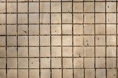 Pequeño azulejo Imagen de archivo