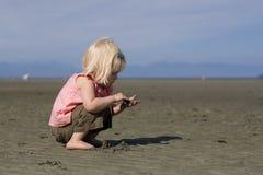 Pequeño Beachcomber Imagenes de archivo