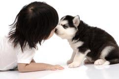 Pequeño bebé asiático que besa el perrito del husky siberiano imagenes de archivo