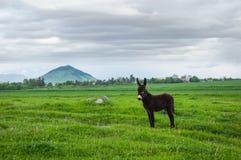 Pequeño burro Imagen de archivo libre de regalías