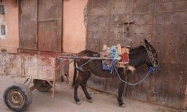 Pequeño burro con un carro Foto de archivo