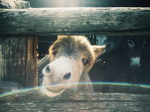 Pequeño burro en una granja de la familia Imagenes de archivo