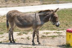 Pequeño burro en una granja del safari del país fotos de archivo