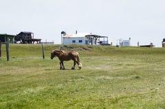 Pequeño caballo marrón en el campo Foto de archivo