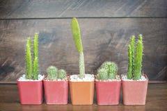 Pequeño cactus cinco en los potes plásticos en la tabla de madera con el viejo fondo de madera de la pared Imágenes de archivo libres de regalías