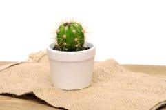 Pequeño cactus decorativo en un pote Foto de archivo libre de regalías