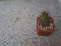 Pequeño cactus en conserva en un pote anaranjado hermoso imágenes de archivo libres de regalías