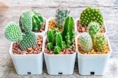 Pequeño cactus en la tabla de madera imágenes de archivo libres de regalías