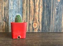 Pequeño cactus en pote en el estante para la decoración casera Imágenes de archivo libres de regalías