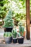 pequeño cactus en pote plástico Imagen de archivo libre de regalías