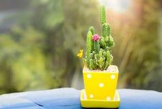 Pequeño cactus en un pote amarillo con la llamarada ligera Imagenes de archivo