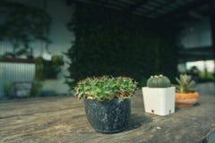 Pequeño cactus tres en un pote imagen de archivo