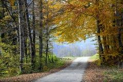 Pequeño camino de la montaña en bosque del otoño foto de archivo libre de regalías