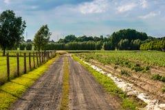 Pequeño camino de tierra en el campo Foto de archivo libre de regalías