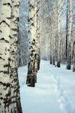 Pequeño camino en madera de abedul del invierno Imagen de archivo