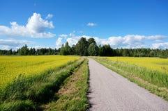 Pequeño camino entre el campo de la rabina amarilla brillante en verano imágenes de archivo libres de regalías