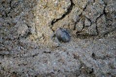 Pequeño cangrejo de ermitaño en arena de mar foto de archivo
