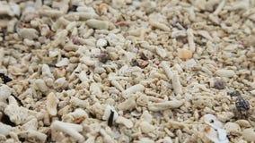 Pequeño cangrejo de ermitaño en la arena almacen de video