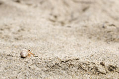 Pequeño cangrejo de ermitaño en una cáscara de la concha que se arrastra en la arena Imagen de archivo