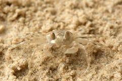 Pequeño cangrejo de la arena fotos de archivo