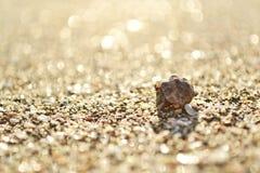 Pequeño cangrejo en cáscara del mar Imagen de archivo libre de regalías