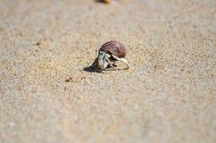Pequeño cangrejo en la arena Imagen de archivo libre de regalías