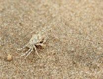 Pequeño cangrejo en un fondo del arena de mar Foto de archivo libre de regalías