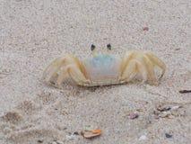 Pequeño cangrejo que presenta para la imagen fotografía de archivo libre de regalías