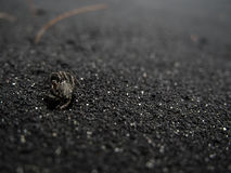 Pequeño cangrejo que se arrastra en la playa negra de la arena Imágenes de archivo libres de regalías
