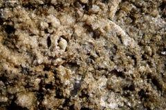 Pequeño caracol de mar ocultado en una cavidad de una roca en una playa en Chalkidiki, Grecia Imagen de archivo libre de regalías