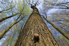 Pequeño caracol en un árbol grande Imagen de archivo