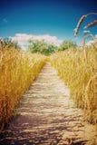 Pequeño carril en el montante del instagram del campo de trigo imagen de archivo