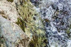 Pequeño cierre de la corriente de la montaña de la cascada para arriba Fotografía de archivo