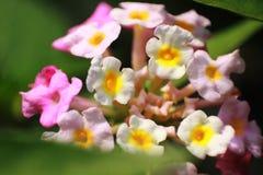 Pequeño cierre mezclado de la flor del color para arriba fotografía de archivo libre de regalías