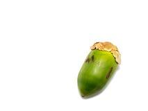 Pequeño coco aislado en el fondo blanco Foto de archivo