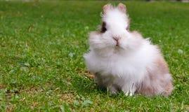 Pequeño conejo Fotos de archivo libres de regalías
