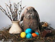 Pequeño conejo Imagen de archivo libre de regalías