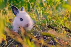 Pequeño conejo fotografía de archivo libre de regalías