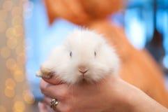 Pequeño conejo blanco foto de archivo