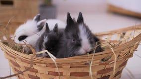 Pequeño conejo blanco decorativo que se sienta en la cesta La celebración de Pascua metrajes
